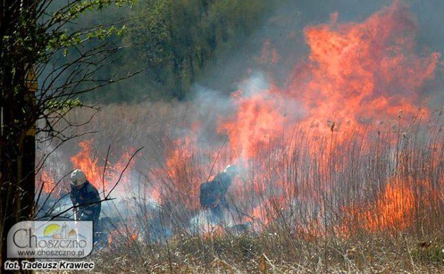 na zdjęciu strażacy gaszą pożar
