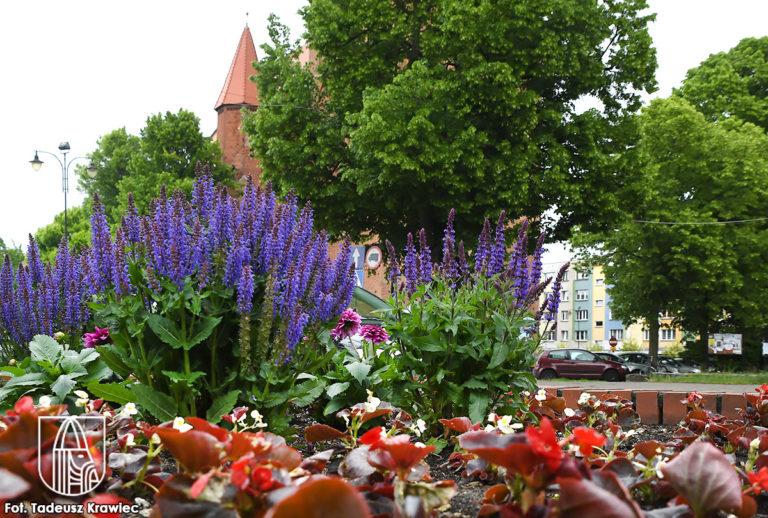Nowe kwiaty w miejskich klombach