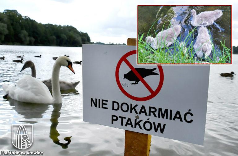Nie dokarmiajmy ptaków